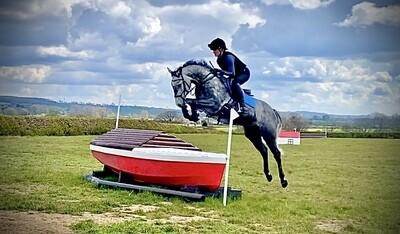 15.2h 5 years grey mare by Hero's Chin de Litrange (Chin Chin) x Clover Hill x King of Diamonds