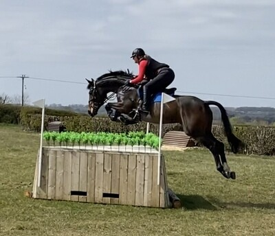16.1h 7yrs dark bay mare by OBOS Quality x Puissance
