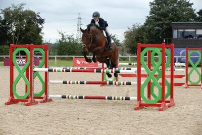 15.3h 9 Yrs mare by Kings Master x Clover Hill (price bracket C)