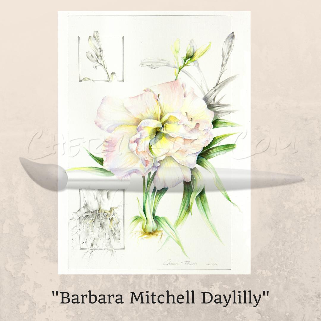 Barbara Mitchell Daylily