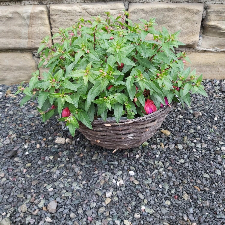 Hanging Basket - Wicker - Various Plants