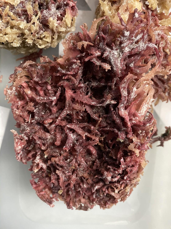 Purple Sea Moss