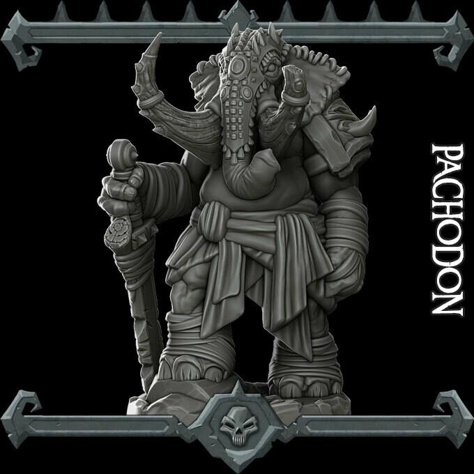 Pachodon