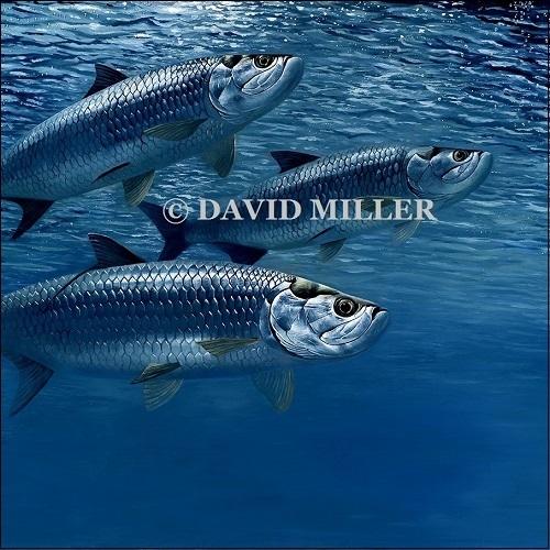 David Miller -  'Blue Water' Tarpon Print