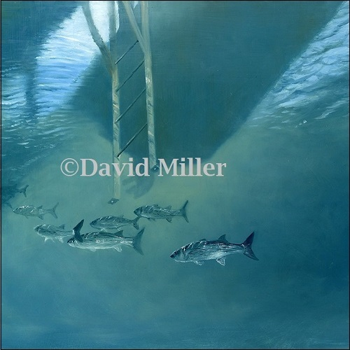 David Miller - 'Harbour Mullet' Print