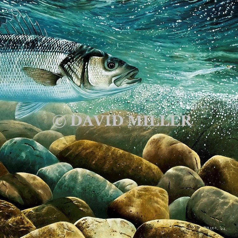 David Miller - 'Bass on the Fly' Limited Edition Print