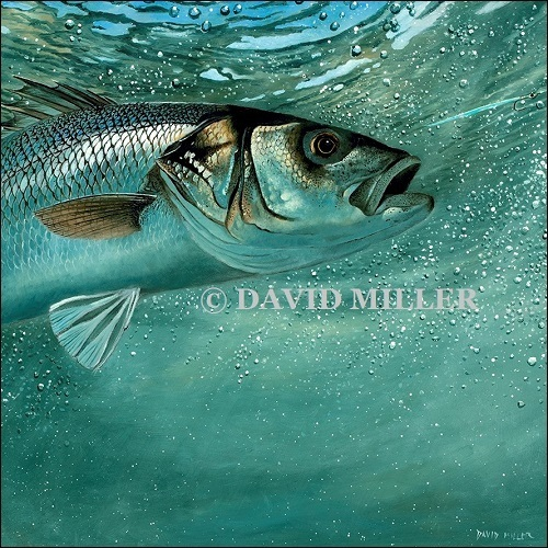 David Miller - 'Bass on the Fly II' Print