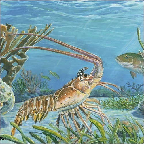 Steve Whitlock 'Divers Dream' - Spiny Lobster