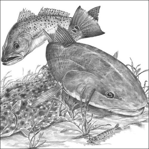 Steve Whitlock 'Redfish, Sea Trout, Flounder Slam Pencil Illustration'