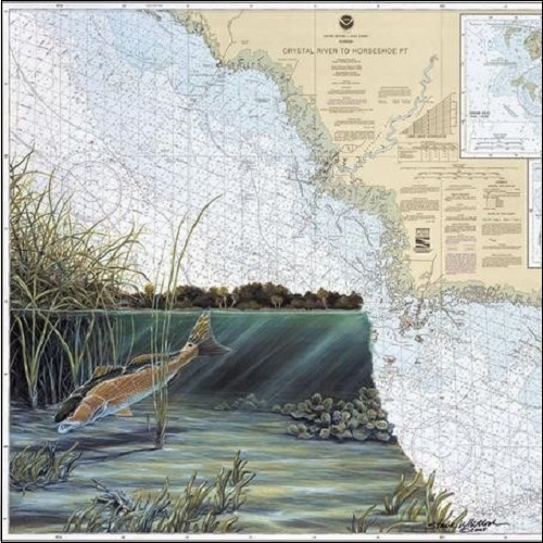 Steve Whitlock 'Cedar Key Redfish Chart'