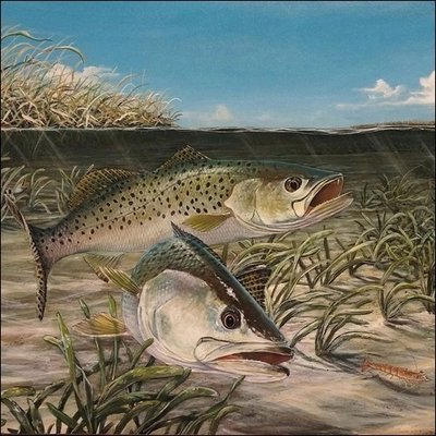 Steve Whitlock 'Shallow Water Specks' - Spotted Sea Trout