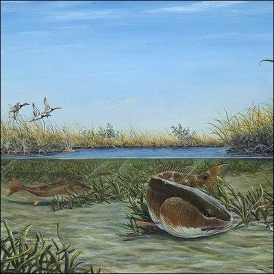 Steve Whitlock 'Up The Creek' - Redfish and Redhead Ducks