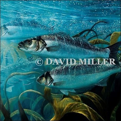 David Miller - 'Bass in Kelp' Limited Edition Print