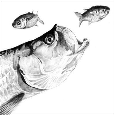 Steve Whitlock 'Tarpon Pencil Illustration'