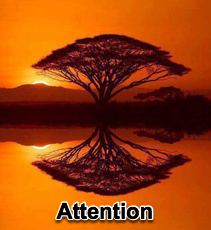 Pay Attention! - 6/17/15