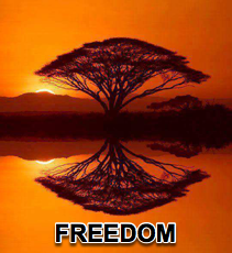 Freedom - 1/20/16