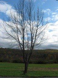"Tree (Saylorsburg, PA), 11""x 14"" Canvas, Priced Each"