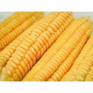 Corn 4 ct