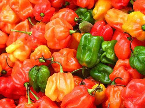 Hot Pepper (LB)