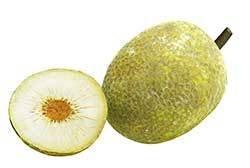 Breadfruit (Single)