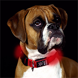Nite-Dawg LED Dog Collar
