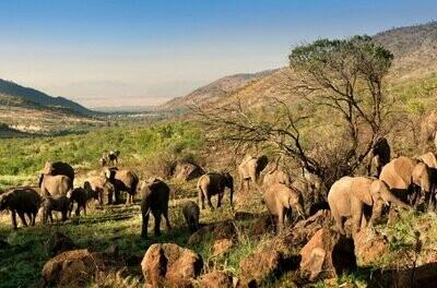 Pilanesberg Wildlife Camping Safari | 1 Night