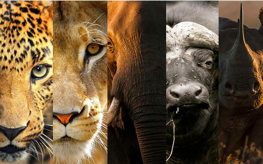 Dinokeng Safari Tour | Full-Day