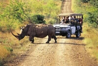 Hluhluwe Self-Drive (Guided Safari) | 3 Nights