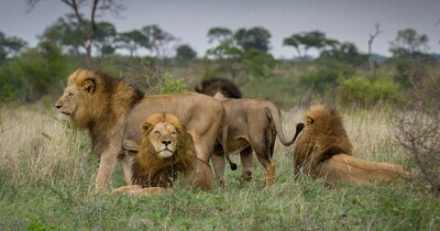 Private Guided Kruger Park Safari | 5 Nights