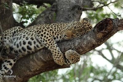 Kruger National Park Open Vehicle Safari | 3 Days