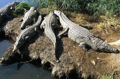 Classic Kruger Park Safari | 3 Days