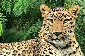 Kruger Park and Panoramic Tour Experience | 4 Days