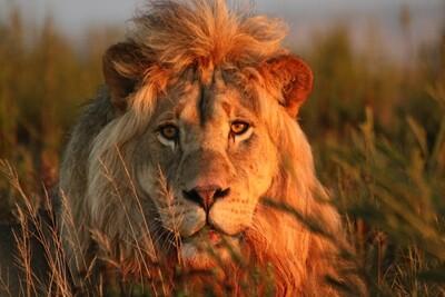 Garden Route Big 5 Safari (Western Cape) | 2 Nights