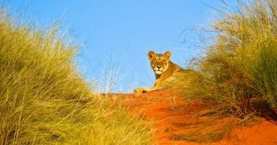 Hluhluwe & Isimangaliso Self-Drive Safari | 4 Days