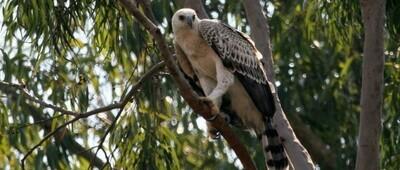 The Marievale Bird Sanctuary Safari Tour
