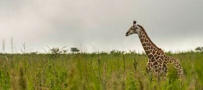 KZN Private Safari, Springbok Lodge(Nambiti) | 3 Nights