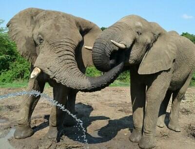 Hartebeespoort  Safari Elephant Sanctuary I Full Day