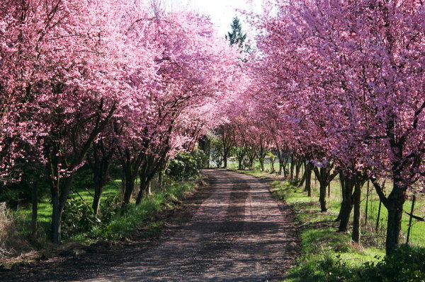 Tree Dedication Program