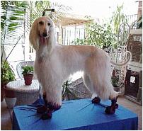 Dog-E-Rain Short Boots (Waterproof)
