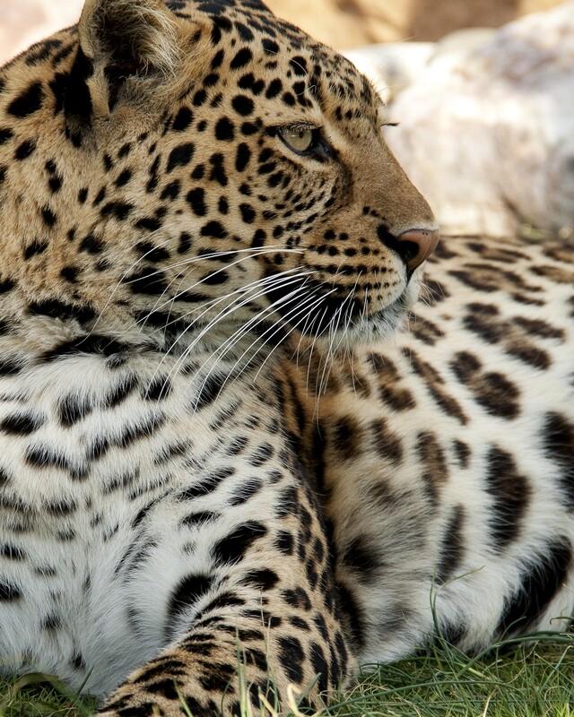 Gift a Photo Safari