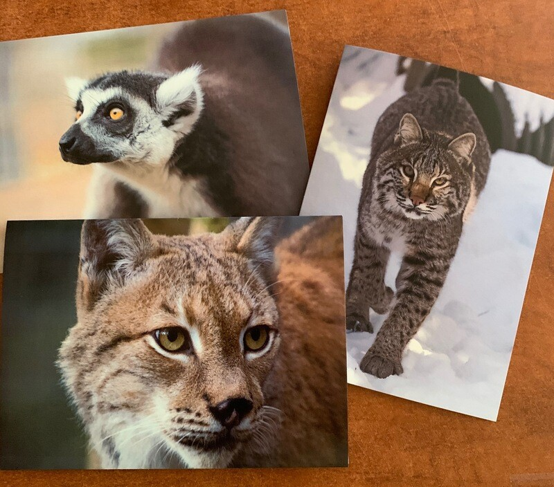 Notecards  (pack of 12)