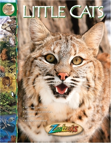 Zoo Books- Little Cats
