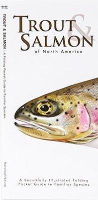 Trout & Salmon of North America