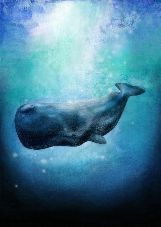 'Whale Whale'