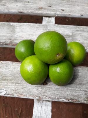 Limão comum - 500g