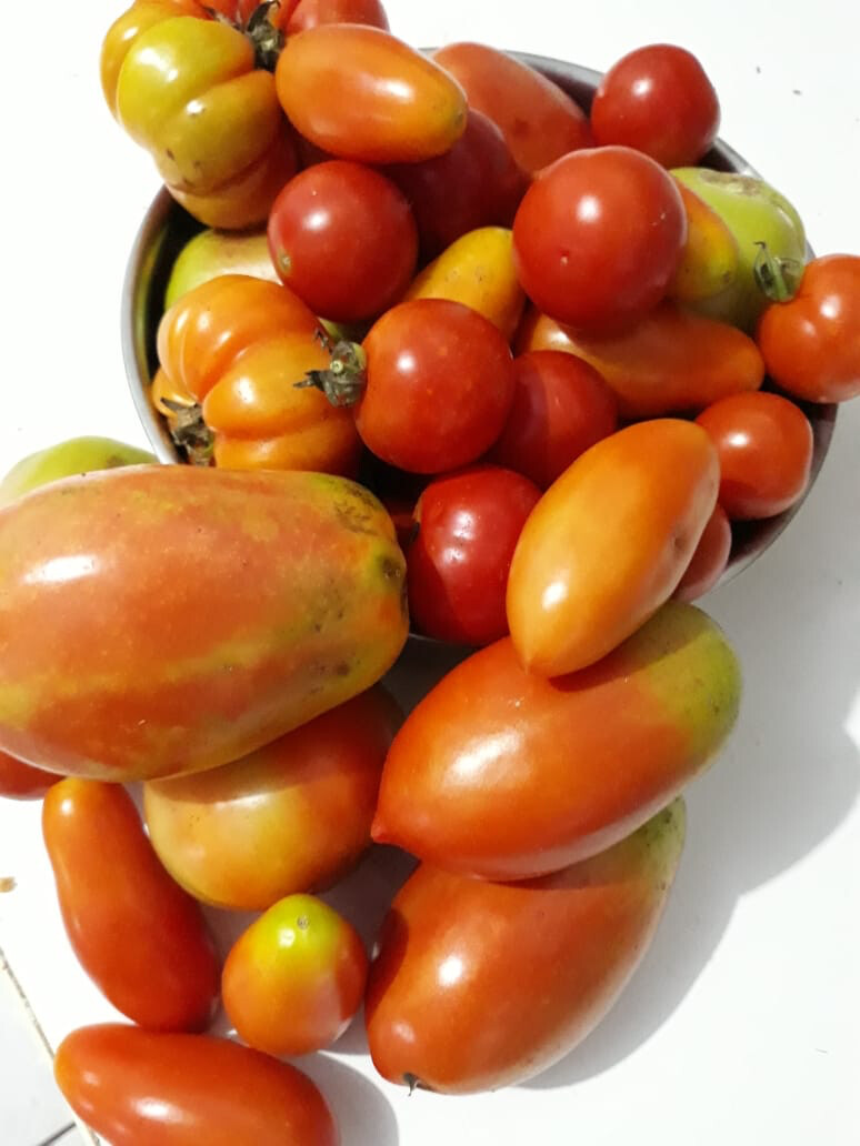 Tomate - 500g