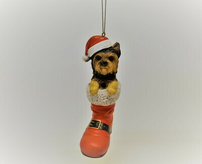 Yorkshire Terrier in a Boot