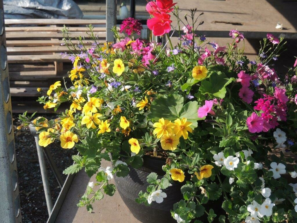 Hanging Basket - Support ALS Research -Fundraiser