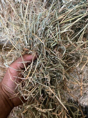 Liverseed/Urochloa 8x4x3 bales - with a dash of lucerne!