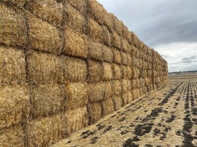Wheaten Straw 8x4x3 large squares